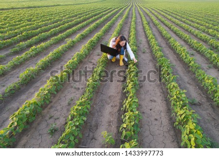 Aerial image of handsome young agronomist in white coat holding laptop and checking soybean quality in rows in summer #1433997773