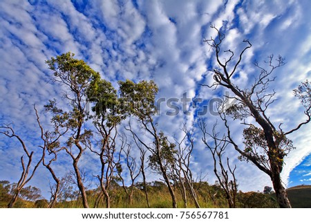 Aerial landscape. Forest and cloudy dramatic sky. Tulay