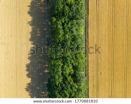 Aerial landscape of summer wheat and barley field crops for harvest, row of trees on farm