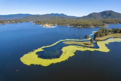 Aerial of Teemburra Dam, Australia, showing algae build up around land features with cattle grazing and dead trees