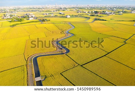 Aerial panorama of beautiful farmlands bathed in warm sunlight & a country road by an irrigation canal winding thru rice paddies on a sunny day in the season of golden harvest in Yilan (Ilan), Taiwan #1450989596