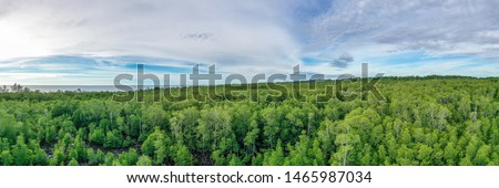 Aerial panoramic view of mangrove forest at Sabah Borneo, Malaysia.