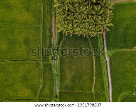 Aerial photo from above of a Green Rice Fiel and Palms in Bali, Indonesia in UBUD area Foto stock ©