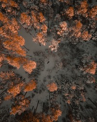 aerial photo of a man lying among the trees of a winter forest