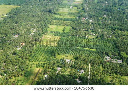 Aerial photo of coconut and palm farms in Thailand