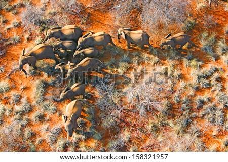 aerial photo of elephant family