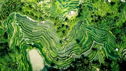 Aerial photo of green rice terraces in Ubud, Bali island, Indonesia. Full vegetation time. Structured fields.