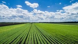 Aerial photo of vegetable farming in midwest