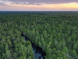 Aerial Photograph of the New Jersey Pine Barrens and Mullica River