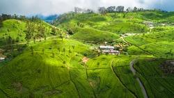 Aerial. Tea plantations near Haputale, Sri Lanka.