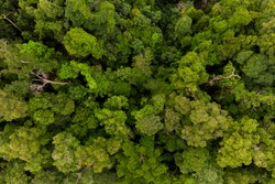 Aerial top down view forest tree, Rainforest ecosystem and healthy environment concept and background, Texture of green tree forest view from above.