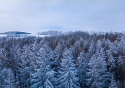 Aerial top down view of beautiful winter forest treetops. Spruce frosty trees covered with snow. Top view camera, snowy landscape. Drone aerial flight, Czech Republic, Europe