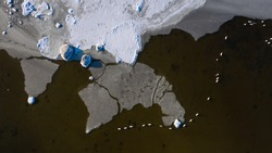 Aerial top down view of the freezing seascape with pieces of fresh ice, resembling the world map and row of wintering swans in open water swimming in row formation
