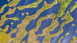 Aerial top-down view to the complex pattern of peat bog pools and intermediate ridges in natural pristine Estonian-Latvian cross-border peat bog