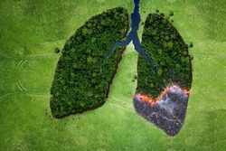 Aerial top view forest tree of ecological disaster of fires. Lungs from forest trees and fire concept. Ecology and environment creative idea. Breath of planet earth