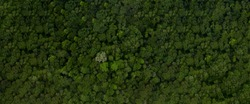 Aerial top view forest tree, Rainforest ecosystem and healthy environment concept and background, Texture of green tree forest view from above, copy space for web banner.