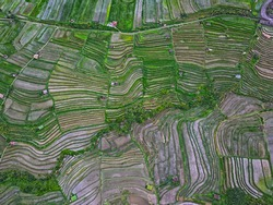 Aerial top view of Jatiluwih rice terraces located in the north of Bali, Indonesia