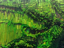 Aerial top view of paddy rice terraces. Flooded fields for rice cultivation seen from above. Wanderlust concept and nature background.