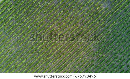 Premium Photos From Shutterstock