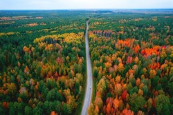 Aerial top view travel drive autumn road in yellow forest, concept of trip by red car.