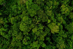 Aerial top view, wide shot of a tropical forest canopy