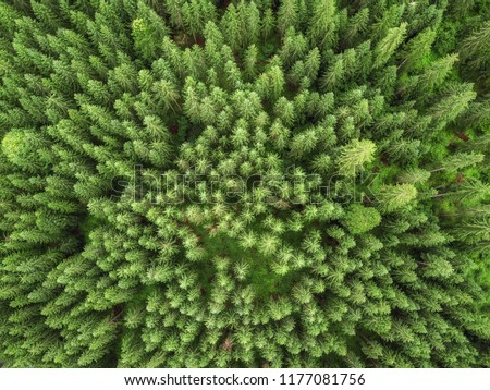 aerial veiw of green alpine forest. drone shot #1177081756