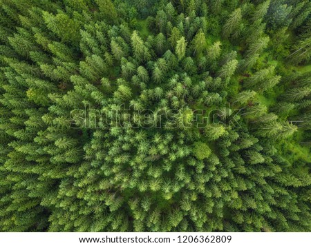 aerial veiw of green forest. drone shot #1206362809