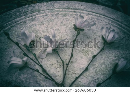 stock-photo-aerial-view-closeup-blossoming-star-magnolia-flowers-vignette-background-japanese-magnolia-269606030.jpg
