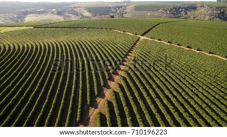 Aerial view coffee plantation in Altinopolis city - Brazil