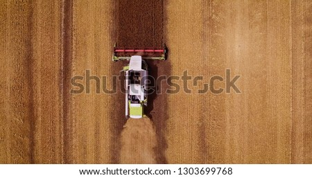 Aerial view Combine Harvester gathers the wheat at sunset. Harvesting grain field, crop season. 4K. Beautiful natural aerial landscape. Food industry concept. #1303699768