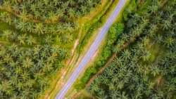 Aerial view, directly above a road through a palm oil plantation in Malaysia. Kilometers of monoculture landscape near Port Dickson, the coast of Malaysia on the strait of Malacca. Tilt shift effect