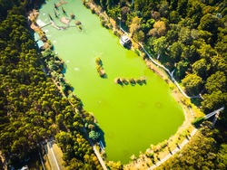 Aerial view down to green lake with green nature around in dendrological park. Georgia