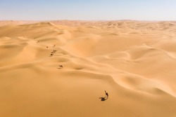 Aerial view from a drone of a group of dromedary camels walking in the Empty Quarters desert. Abu Dhabi, United Arab Emirates.