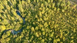 Aerial view from drone of young trees growing at the site of forest fire. Recovery of environment after disaster. Little river from birds eye view. Camera tilt down. Nature landscape.