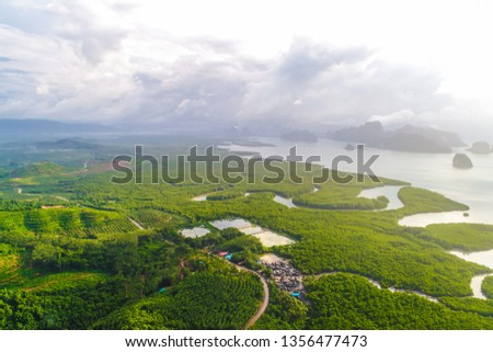 Aerial view gree mangrove nature tropical rainforest to the bay of sea