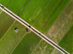 Aerial View - Green Paddy Field from above