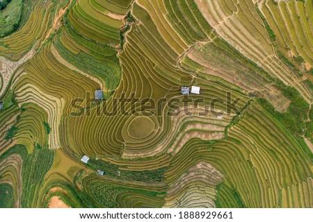 Aerial view laocai Vietnam Vietnam Paddy fields, Sapa, Vietnam ストックフォト ©