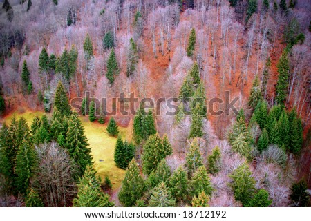 Aerial view of a colorful forest