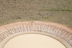 Aerial view of a farm dam in Western Australia with sheep surrounding