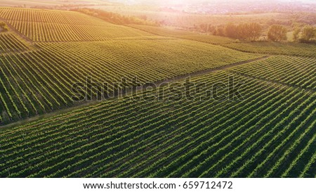 Aerial view  of a green summer vineyard at sunset #659712472
