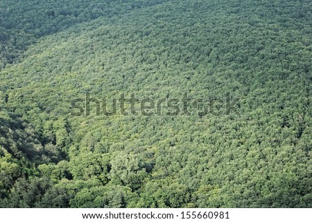aerial view of a huge green forest #155660981