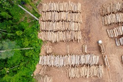 Aerial view of a log storage yard from authorized logging in an area of the Brazilian Amazon rainforest.