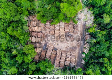 Aerial view of a log storage yard from authorized logging in an area of the Brazilian Amazon rainforest. Сток-фото ©