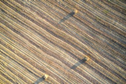 Aerial view of a mown wheat field with sparse rolls of straw. Copy space.