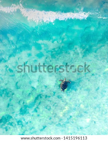 Aerial view of a sea turtle swimming through the blue ocean and wave