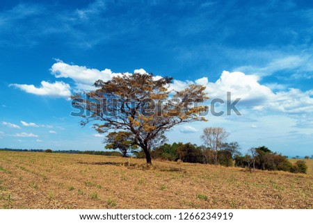 Aerial view of a tree in the blue sky. Beaufiful landscape. Great countryside view. Great rural scene. Rural scene. Agriculture scene. Countryside scene.
