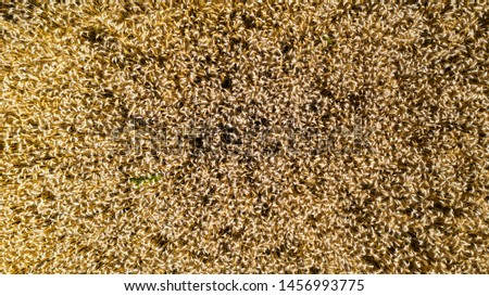Aerial View of a wheat field #1456993775