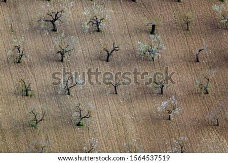 Aerial view of  almond trees in flowers in the farm land, Majorca lands, Balearic Island, Spain. #1564537519