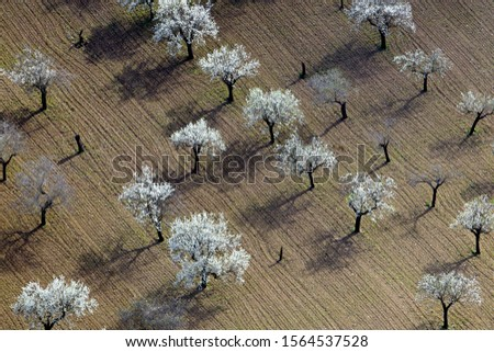 Aerial view of  almond trees in flowers in the farm land, Majorca lands, Balearic Island, Spain. #1564537528