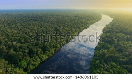 Aerial View of Amazon Rainforest in Brazil